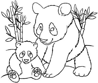 Tranh tô màu gấu trúc rất đẹp cho bé | Gấu trúc với nhiều nét vẽ đẹp